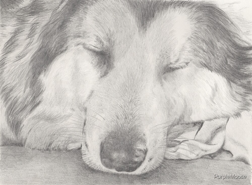 Sleepy Malamute by PurpleMoose