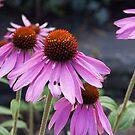 Pink flower 4 by Sheryl Marshall
