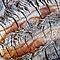 Macro Palm Tree Bark