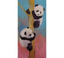 Panda Fun Photographic Print