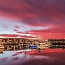 Winter Delight - Cleveland Qld Australia by Beth  Wode