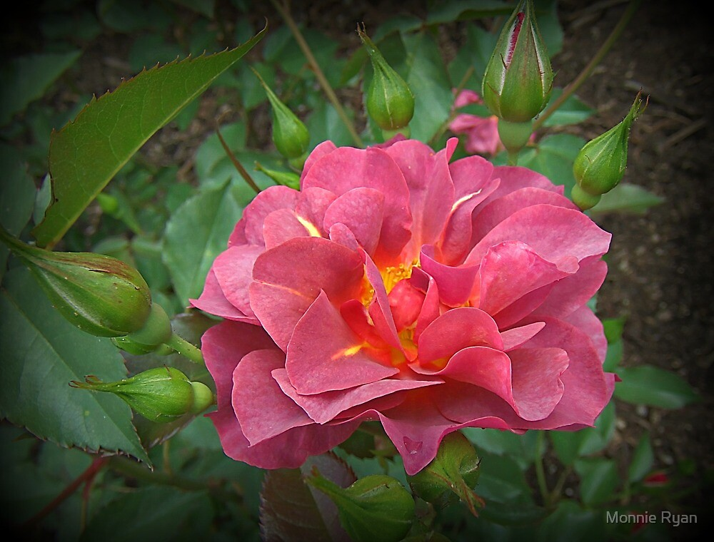 Rosy Outlook by Monnie Ryan