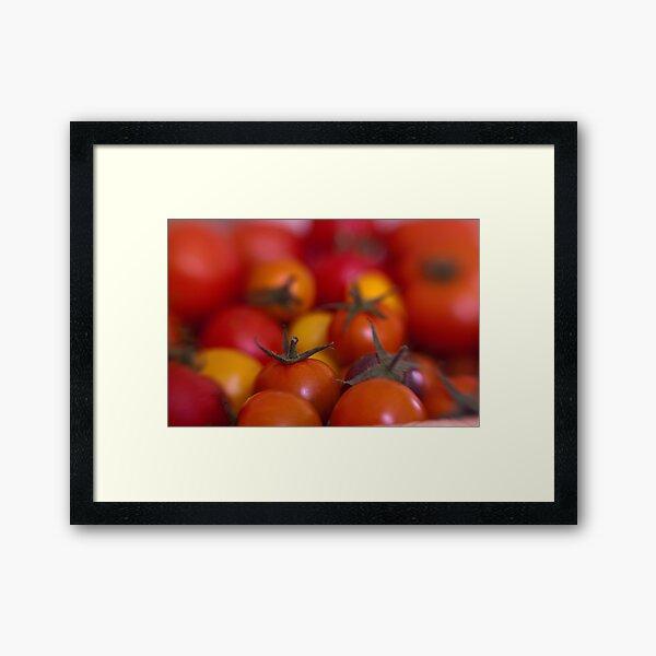 Tomtom Framed Art Print