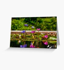 The Lilly Pond Greeting Card