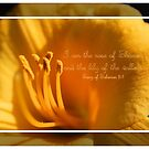 I am the Rose of Sharon and the Lily of the Valley by aprilann