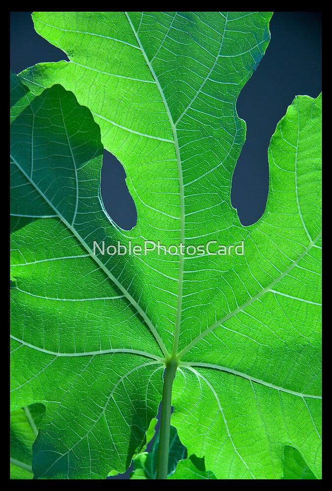 Vivid Green Leaf Veins by NoblePhotosCard
