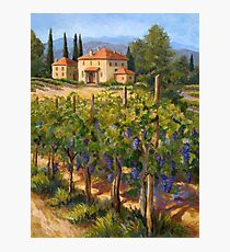 Chianti Vineyard Photographic Print