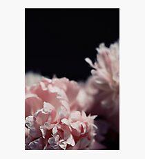 Perennial Photographic Print