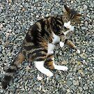 Pretty Kitty von BlueMoonRose