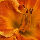 Daylily Close-up by Sandy Keeton