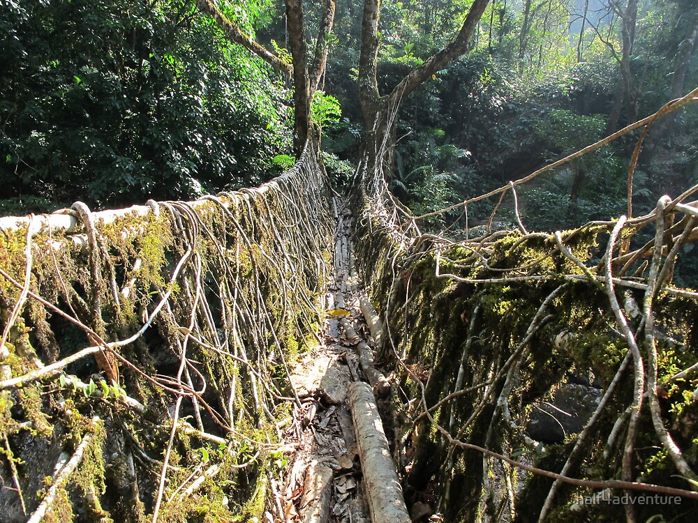 Root Bridge by half4adventure