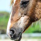 old soul horse by Cranemann