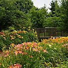 Bridge in the Daylily Garden by Sandy Keeton