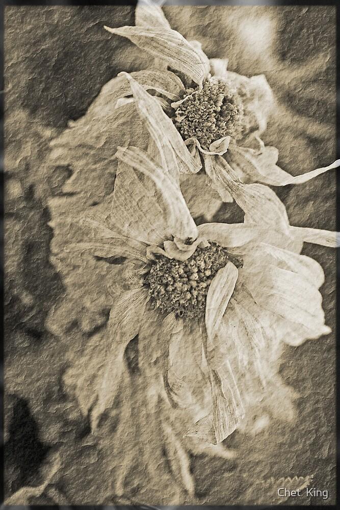 Dry Flower 1 by Chet  King