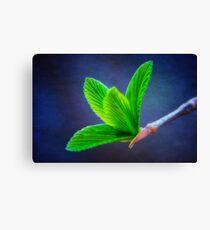 Vivacious Viburnum Leaves Canvas Print