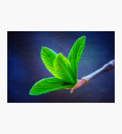 Vivacious Viburnum Leaves Photographic Print