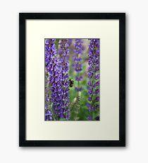 Lavender bumblebee Framed Print