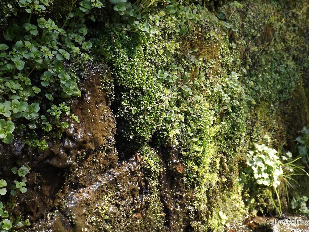 Mossy Wall by Callum Palin
