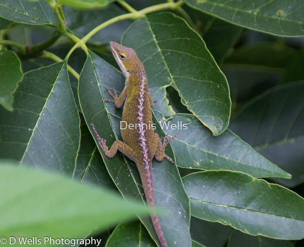 Lizard laying on a leaf by Dennis Wells