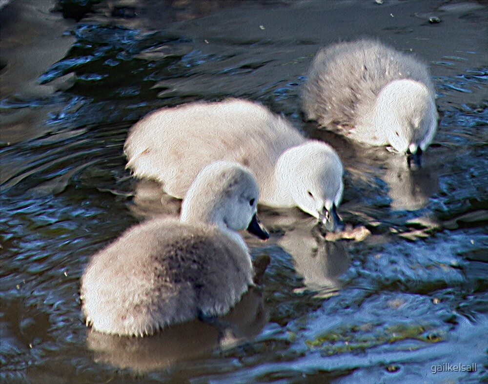 Cygnets Together by gailkelsall