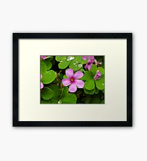 Shamrocks & Drops Framed Print