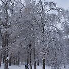 Elegant Tree after Ice Storm by NoblePhotosCard