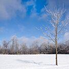 Icy Tree in Snowy Field by NoblePhotosCard