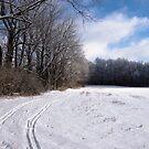 Tracks through Snowy Field by NoblePhotosCard