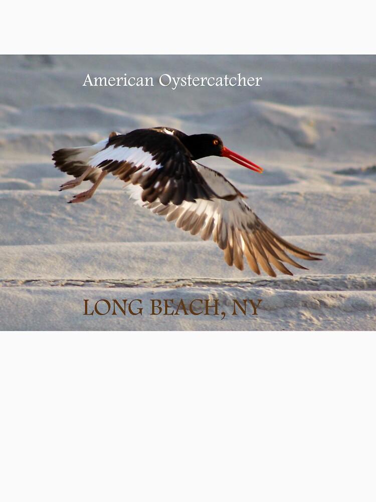 American Oystercatcher by AnneDB