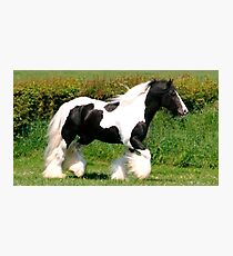 elite horse Photographic Print