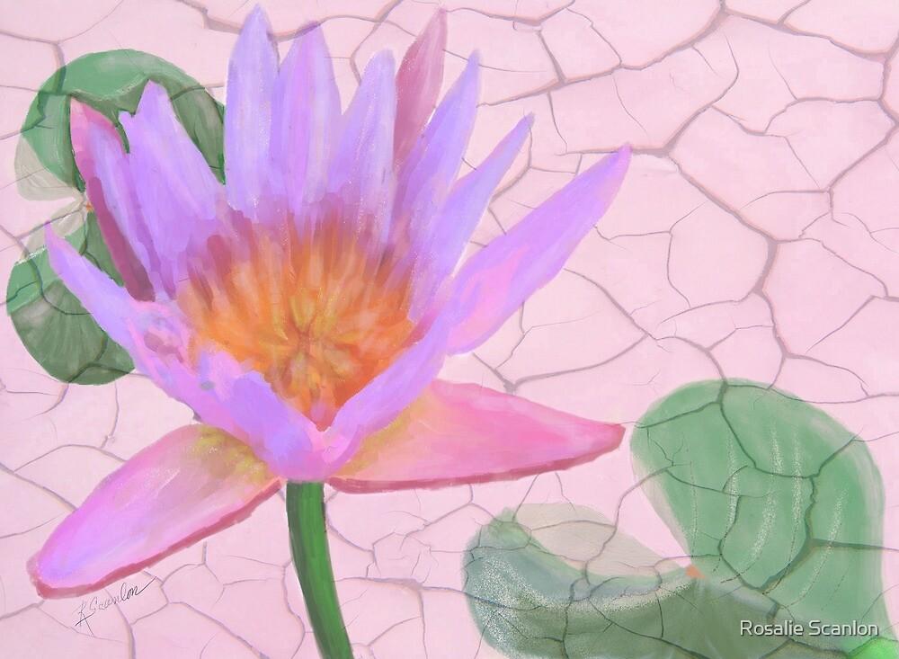 Pink Water Lily Art by Rosalie Scanlon