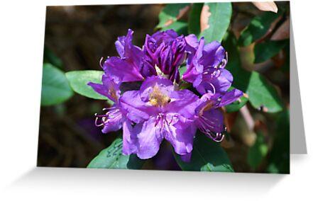 Purple Flowers by 365Londontown