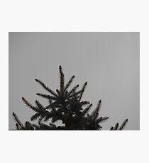 Desolate Winter  Photographic Print