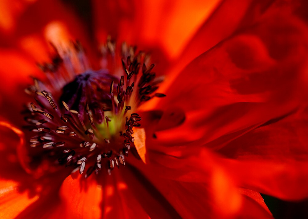 Poppy by DJ Fortune