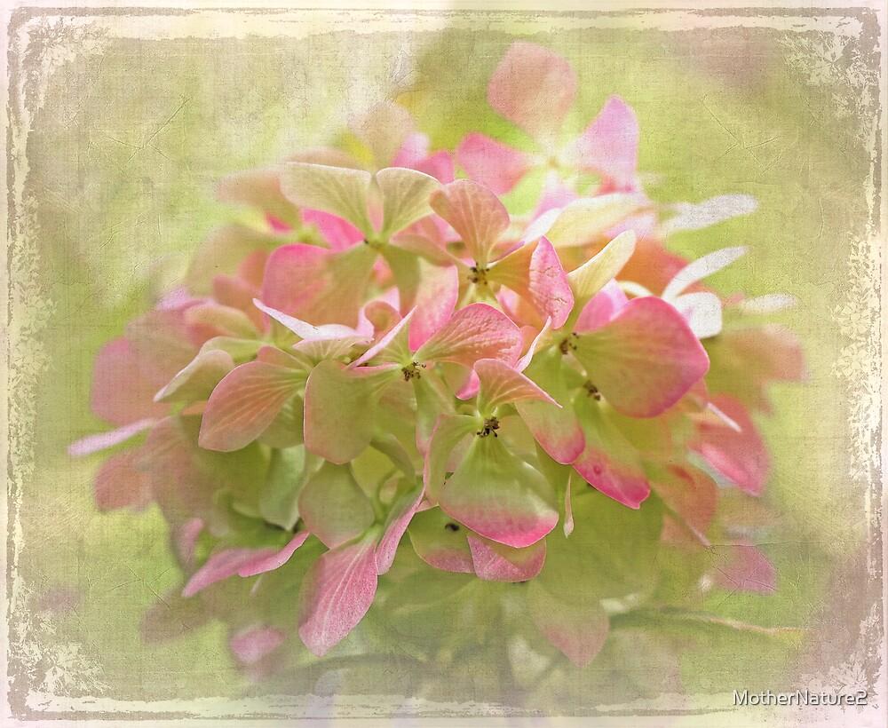 Pink Hydrangea by MotherNature2