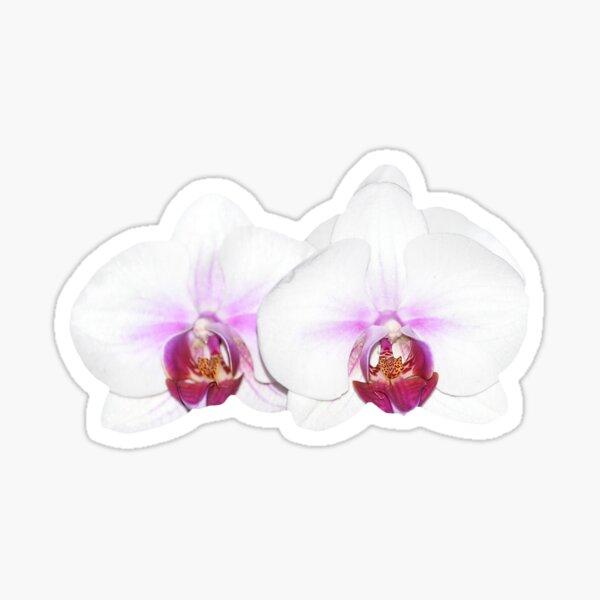 White Orchid Sticker