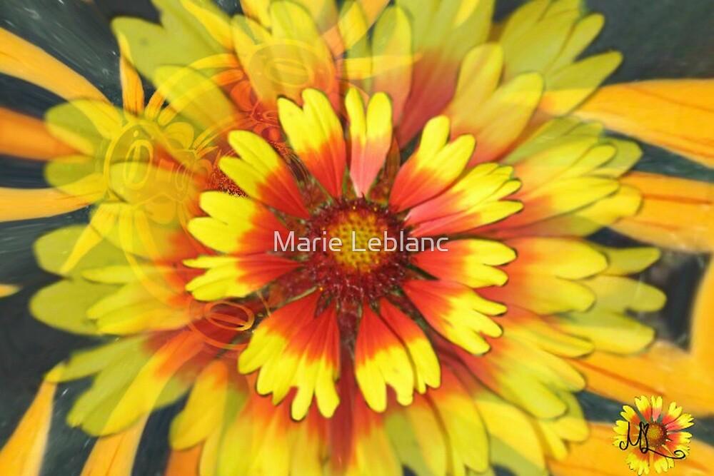 LOVEFLOWERS by Marie Leblanc