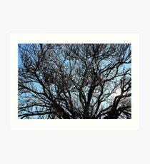 Winters tree, Hill End. Art Print