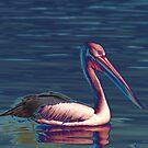 Pelican by Sharon Atkinson