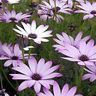 Purple  by Lisa Kent