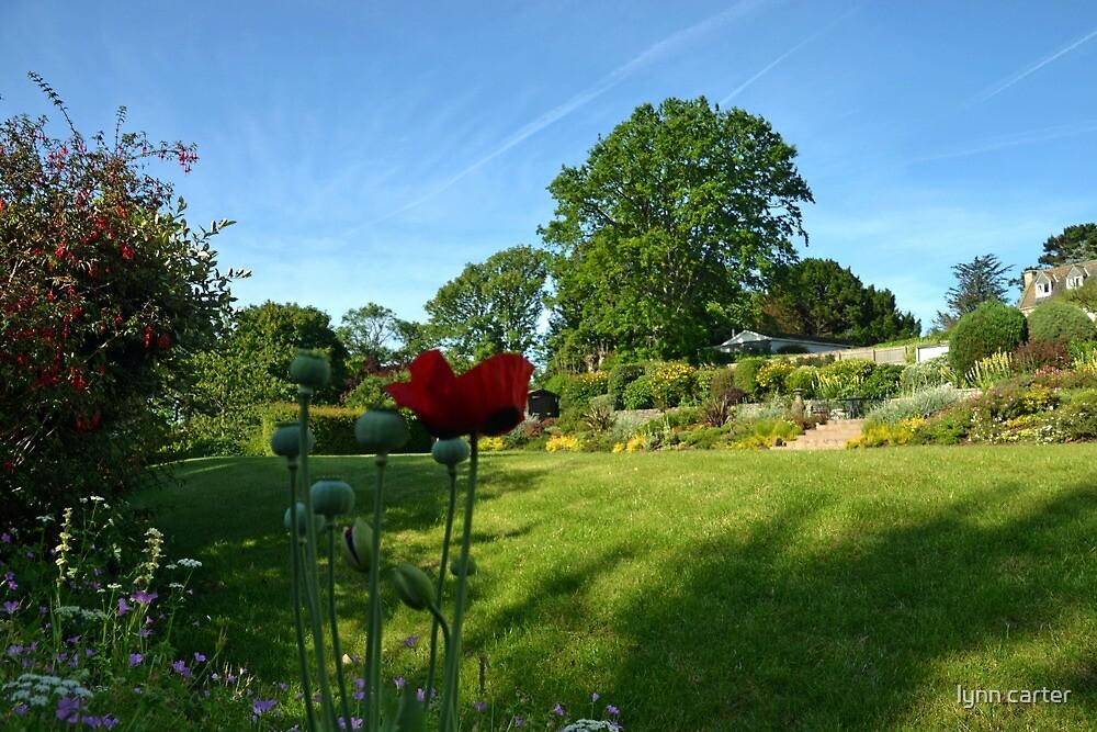 In Our Garden........... by lynn carter