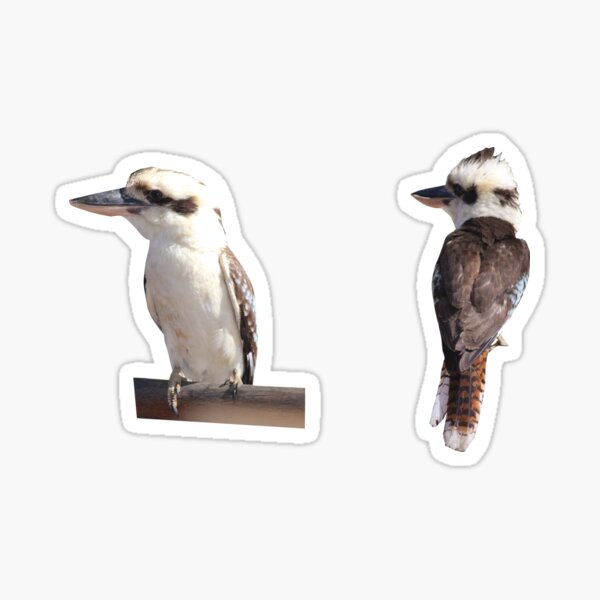 Kookaburra Sticker Set Sticker