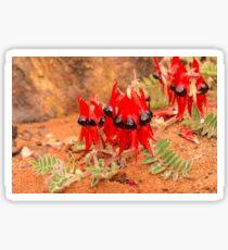 Sturt Desert Pea Sticker