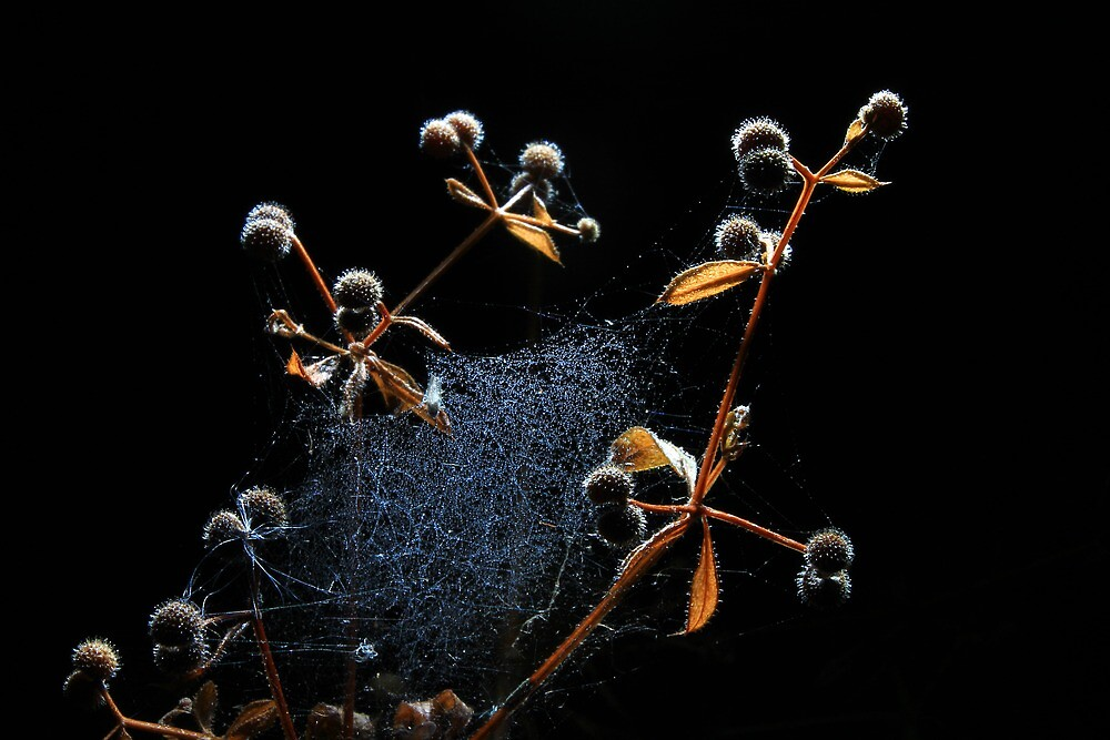 Spider webs and sticky buds by turniptowers
