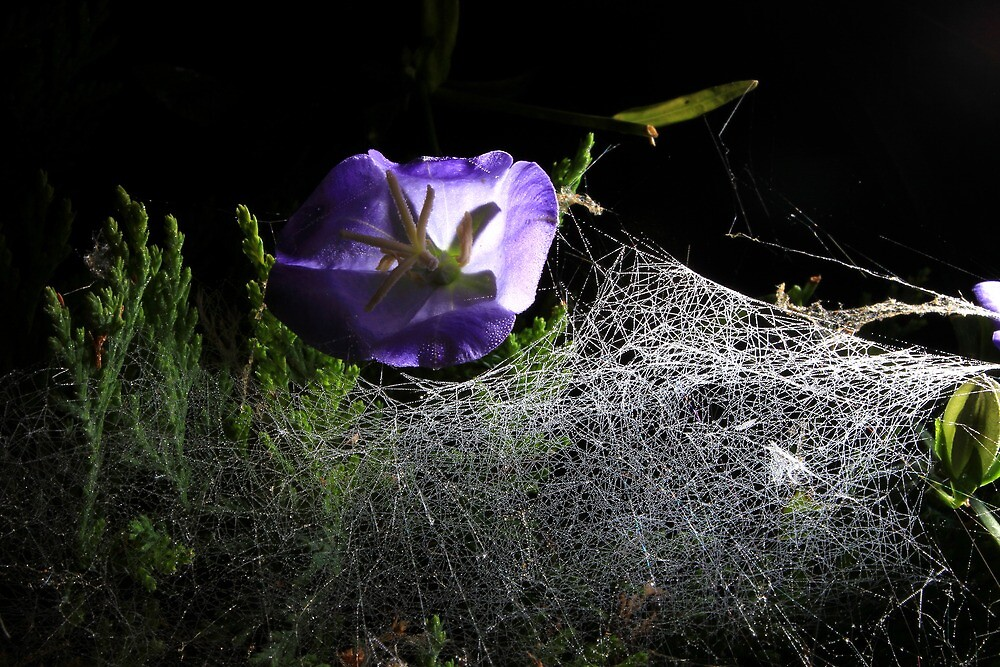 Spider webs and bell flower by turniptowers