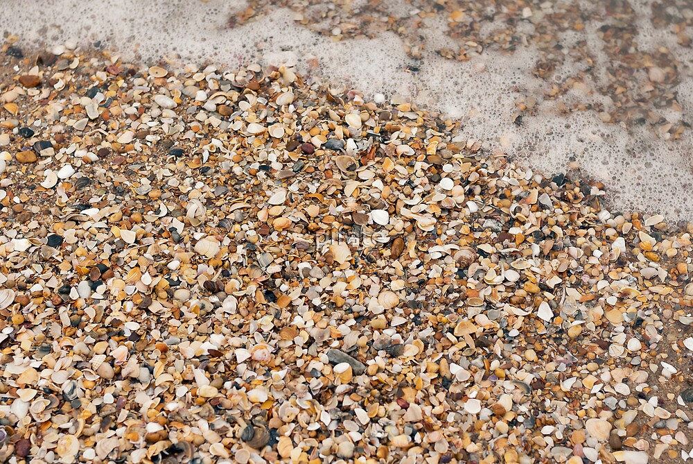 Sea shells by pifate