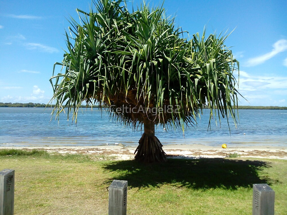 pandanus by CelticAngel82