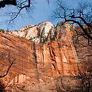 Majestic Mountain at Zion Park by NoblePhotosCard
