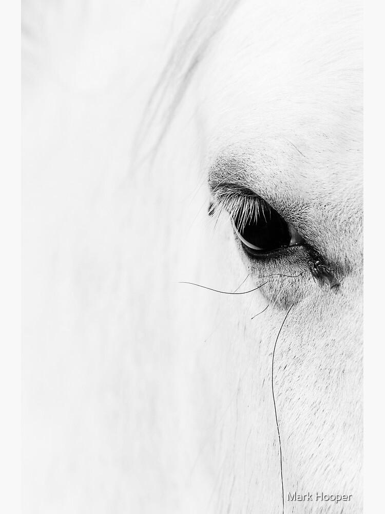 Wild Horse by MarkHooperPhoto