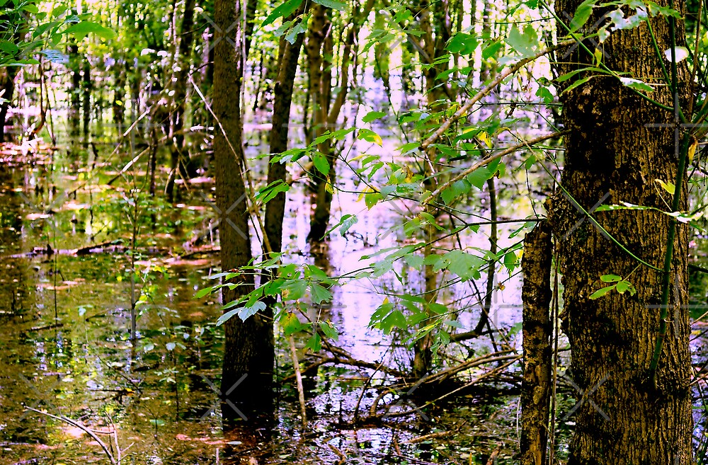 Swamp Waters by Scott Mitchell